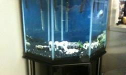 Tank for sale! Up and running now have a blue Dempsey and a sucker fish in it!!! This ad was posted with the Kijiji Classifieds app.