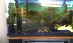 I have a tank with 4 pleco they measure 6 to 8 inch One big gold fish Rainbow shark A few tetras   will sell fish seperate Two filters Heater Two air pumps A few plants and rocks Great tank I just don't have time to take care of ot anymore I think its a