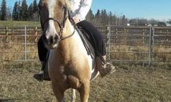 Sale/lease/trade Bailey is eligible for registration with the Canadian pinto registry, paper work is being processed. Bailey had 30 days under saddle last fall, but hasn't been ridden consistently since. I am getting out once or twice a week, weather
