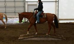 Carmen is an 8 yo flashy chestnut WB mare. She has a great start and is a lovley mover. She is 15.2hh. No papers. Trailers and clips great. Carmen has been on a few trails and has done lots of ring work. Carmen just completed a despooking clinic with Bill