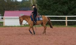 For Sale/Trade: 2003 red dun reg. Quarter Horse mare. Scarlett is reining bred and trained and knows all of her reining manoeuvres. She has competed successfully in reining, showmanship, horsemanship, pleasure and trail. Great on the trail - alone or with