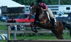 Oliver is a 17HH, bay, AQHA gelding.  He has been shown the past summer by a youth in showmanship, halter, english flat classes, low hunter and trail.  Looking for someone interesed in an in-barn lease.  This guy has a ton of potential, he is quiet in the