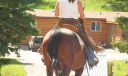 ~Vivienne ~  2000 Bay Mare 15:01Hh, of Hambletonian STB. Breeding (non-pacing)    Quiet, trusting and generous by nature, Vivienne has been a gentle and uncomplicated trail buddy and family pet for the five years she?s owned us. Although green, this mare