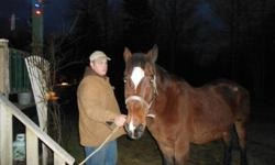 hi i have a 13 year old gelding horse for sale the reason i don't want him is because i want a draft horse instead something bigger.I am asking $400.00 if u are interested give me a call 543-9218