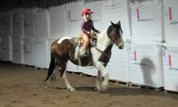 This 4 year old mare is quiet and has been profesionaly trained. She is easy to catch and handle, great with the other horses. Excellent with kids. She is a must see and ride. Beautiful color. Please call 403-652-8266