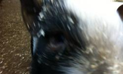 Hi there! We have 4 pot bellied pigs for sale. The girls are about a year and Max is about 3 now. Little kayla is in the first pic (sorry its a bit of a close up ;) ), she is very shy but not at all vicious or harmful, same with her 2 sisters stella jr in