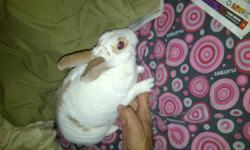 Free bunny to good home, about a year old. Needs to go asap due to allergies! Please contact for more info