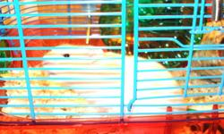 we purchased a hamster two weeks ago and it is not the pet for our family. Not sure if it is male or female. Colour is tan and white. Very cute Please call if interested.