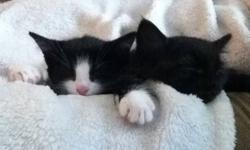 Both male, litter trained and ready to go! Very calm and cuddly. This ad was posted with the Kijiji Classifieds app.