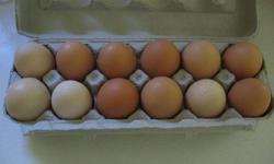 Free Range EGGS available. Shades of brown-white ones comming.  Mini + Small = $3.00, Large = $3.50, Jumbo = $4.00, 18 pack = $5.00. All Free range, no GMO corn or soy fed.  Just starting, so ducks aren't laying yet!  Come visit for eggs, education and