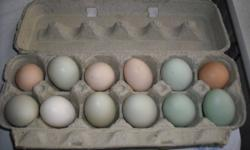 We have free-range multi coloured eggs for sale, $2.50/ dozen. We purchased a few hens when my daughter was an infant (for a learning experience)and our flock has grown. She is now over 2,  and helps everyday rain or shine to look after the birds and