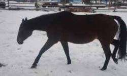 Free thoroughbreds, chestnuts, bays, blacks, 2-5 years old , all broke   Want good homes