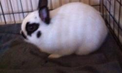 Domestic cute white bunny with black markings on face. No cage, no food. Pick up only. North end Edmonton. FREE! Call 780 700 4332 This ad was posted with the Kijiji Classifieds app.