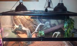 6-7mth old Female bearded dragon for sale with tank and all acessories. She comes with everything you need, heat lamp, uv lamp, food dish everything. Over$850-900 worth of stuff. Shes very friendly. Good with kids and LOVES her baths and to eat out of