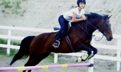 12 year old registered half Morgan mare. Gem stands 14.3hh with a stout body type. Well mannered, safe to handle and a lot of miles with young, skilled rider. Gem is suitable for a rider with an intermediate skill level. Looking for the right person to