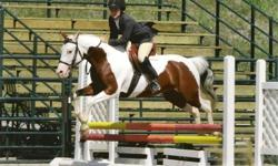 I am looking for a motivated young rider to Half Lease my show pony. Dancer is very well behaved and safe she awesome in hunters, dressage, western, and trail riding. I am looking for a young rider to half lease Dancer who is interested in showing.   Half