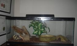 2 year old gekco large tank heat light and everything in tank 100.00 great with our three year old child
