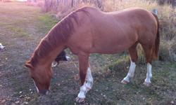 healthy and sound, both good riders. Sell with saddles and bridles for $550 each.