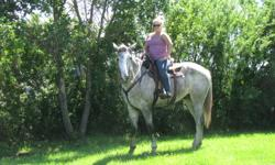 3 year old 17.3hh clyde/thorough bred sport horse. 2 months professional training early spring. Has been rode consistently since. Has been rode inside/outside, through water, mud, hills and chased cows. Picks up correct leads, side passes, moves off leg