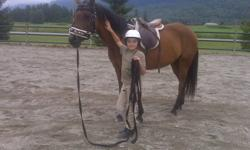 This mare is 15 years old and has done it all.  Little One is a great horse for beginners who have some riding experience.  She also loves to jump and would like an experienced Junior who can give her a good workout in the ring or cross country.   Leasor
