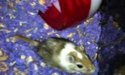 I am trying to get rid of my male gerbil because I am living with too many cats and I really do not want him to die. He has half a tail because of my dumb cat. He comes with food, bedding(purple), shavings, 2 waterbottles, food dished, 1 and a half bags