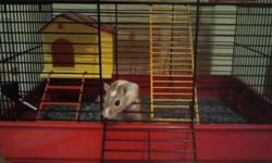 I am selling my gerbil who is less than 1 year old.  Included is two cages, 1 Habitrail and 1 two storey cage, food, treats, water bottle, a big bag of dust tree shavings, small house that fits inside the cage and a wheel.