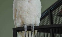 Jack is an 11 year old Goffin Cockatoo. He is a friendly bird who likes to dance, talk and sing. His family will be relocating so he needs a good home. Jack comes with a large black cage on a rolling stand with a shelf on the bottom for storage, as well