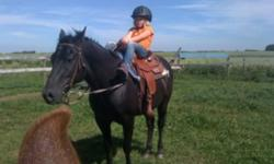 12 year old gelding..14.3H... Good with kids, dogs, quads, farrier, loading, saddling, tying... Has been a trail horse at a local youth camp since he was a two year old And then we bought him three years ago for our kids... He has been used for the past