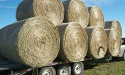 We have good quality hay for sale. From straight grass to 70% alfalfa. NO RAIN and put up dry. Comes in round bales. Priced @ $60.00 a bale and up. We can deliver. Please call 403 356 0200.
