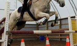Monty is a 17.1 grey hanoverian with 1/4 Arab. Monty is 15 years young. Monty is a sweet loving horse who loves to jump. You do not need a lot of leg to get this sweet loving horse to go. He is not spooky at jumps, cars, dogs or anything. He is very brave