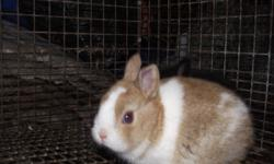 have numerous types of rabbits for sale miniature, dwarf, regular etc really cute, variety of colors, will make great pet