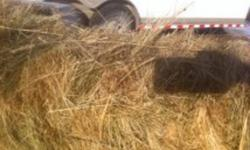 Hi,  I have about 250 bales of grass hay for sale.  It was cut late and rained on but we got it off clean, it is mostly crested wheat but there are some bales that are brome and I have some bottom alfalfa bales as well.  It would work well for calves, if