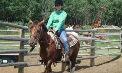 Gray Acres- Beginner/ Learn to Ride Camps and Riding Lessons   Come and enjoy yourself on nice, safe lesson horses and ponies. Great experience for 1st time, and or beginner riders.   Students begin by learning the following:   - Safety around horses on