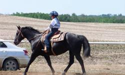 This 17 yr. registered QH mare is super safe for a beginner!  She's met a bear on the trail, has ridden by buffalo, crossed rivers & mud and walked along busy country roads.  She?s been a  4-H drill horse for the past 2 years and walked in the parade.