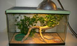 """I'm selling a green anole.It is male and healthy.I bought it a few months ago at PJ's pets.It is easy to care . It's good for children or beginners. I will sell it with: -10 Gallon tank,20""""*11""""*12.5"""",with metal caged lid,also perfect for any small"""