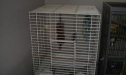 I have a green cheek conure and a cockatiel for sale both with own cage green cheek conure $250.00 cockatiel $150 please call 9056820710
