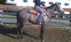 Coming 4 yr old breeding stock paint filly by AQHA stallion Air In Time. Stocky build, really athletic, should stay pony sized. She is broke and quiet. This ad was posted with the Kijiji Classifieds app.