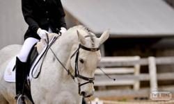 My Trade Agreement 13 years, grey, Percheron X TB, mare. She has competed successfully over the summer in First level Dressage. Received Reserve Champion in the Ontario Championships. She is currently training in 2nd Level. Has a passport. Trailer,