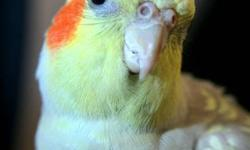 My name is Brandy and I offer a range of mobile bird services. I have over 10 years of experience working with a variety of different types of parakeets and parrots, from small zebra finches up to the large Hyacinth Macaws. I am comfortable with all types