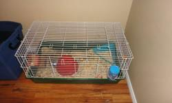 2 year old Long hair guinea pig.  Good with children. Comes with large cage, litter box, saw dust, water bottle, food dish, food, hay and hut.  (Cage was $260.00 new).  Have to say goodbye as we have an allergy to her :(   Call or Email