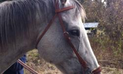 Hackamore bridle w/ reins. In new condition. Fits my big Appendix/QH. His head measures 50 inches and still can go 3 holes bigger and 1 hole smaller. Asking $75 firm. ~Can deliver to Vernon, Enderby, Armstrong & Salmon Arm~ . This ad was posted with the