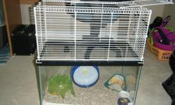 I am wanting to sell my cute little hamster, Raz, to someone who will take good care of him. I am currently finishing up nursing so I do not have time to take care of him along with all the other pets I have. But I do want to make sure that he goes to a