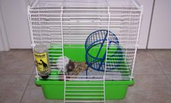 Male hamster grey and white, gentle, bought from pet store approx 3 months ago. Need to sell