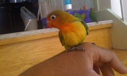 I am selling my handfed baby bird   1 Green Fisher Lovebird 10 weeks old Tamed and does not bite at all. (red beak) $150   Please bring a box / carrier if possible Keele St. and Sheppard Ave. West Area Can deliver within GTA, depending on area, day and