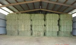 Large Square Bales 3x3x7.5( 750-800lbs) of 1st cut 90%timothy&broam and 10% alfalfa 300 bales avaliable, no rain, excellent shape! 80 wrapped large square 3x3x5 2nd cut alfalfa All hay is top quality! Calls only ! 6135514402
