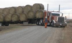 Have 100 bales of mixed hay & 150 bales of 2nd cut alfalfa hay. Round bales that were baled dry with no rain. Will load and can deliver up to 34 bales at a time. Call for delivery price. Can not unload. Near 22x & 24 hwy east of calgary. Thanks. No