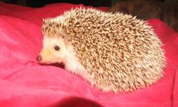 I have a pet hedgehog I am selling. She does not come with any supplies. Please call 905-325-0747