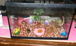 i have a 5 gallon tank that i was using to hold my hermit crabs but i have up graded to a 40 gallon so i no longer need this one it comes with a coco nut hut a palm tree 2 sponges a piece of drift wood you just have to wet it and 3 shells a small one and