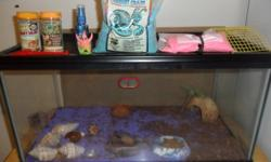 I must part with my 2 pet hermit crabs one male one female as we are expecting a baby. 15 Gallon Tank and crabs are approx one year old. Everything you see here is included. coloured sand, water dishes, food, thermometer, shelter, scooper, mister,