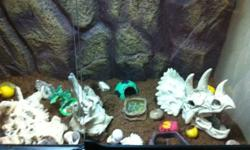 3 Hermit crabs, huge enclosure with lighting and stand, and accessories! This ad was posted with the Kijiji Classifieds app.